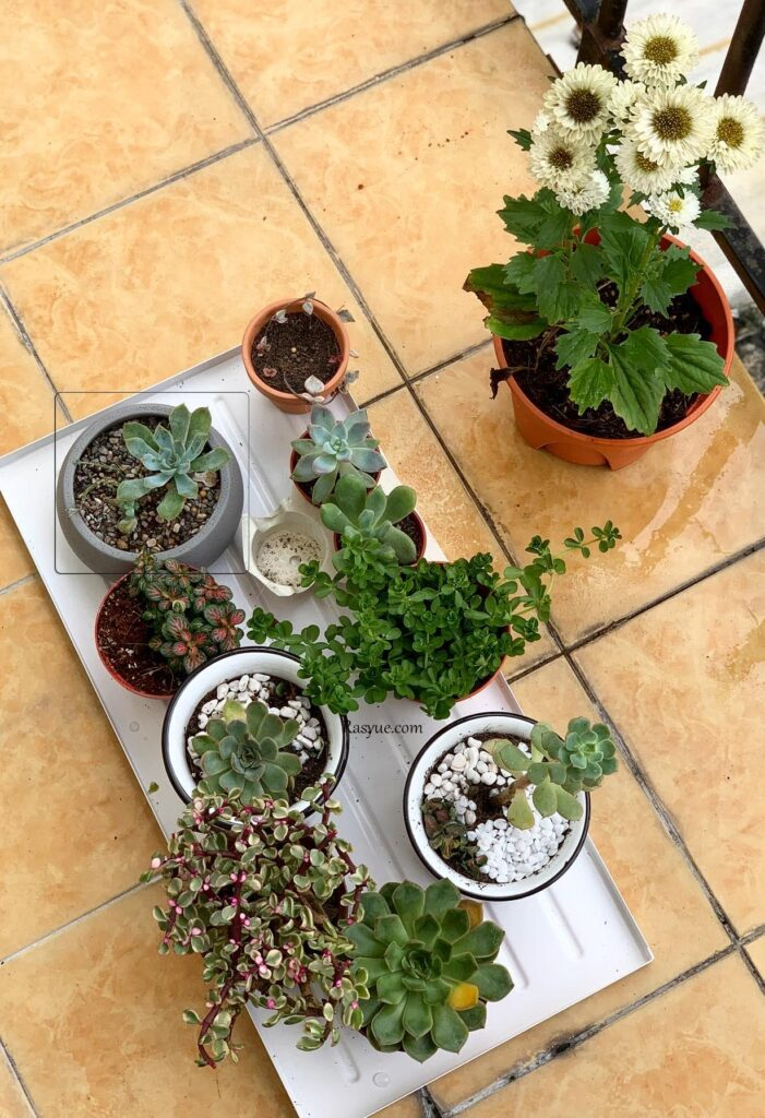 how-to-make-your-own-terrariums